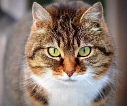 Stérilisation des chats errants - Procédure